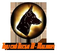 Mua bán chó Becgie Bỉ Malinois thuần chủng, đảm bảo uy tín